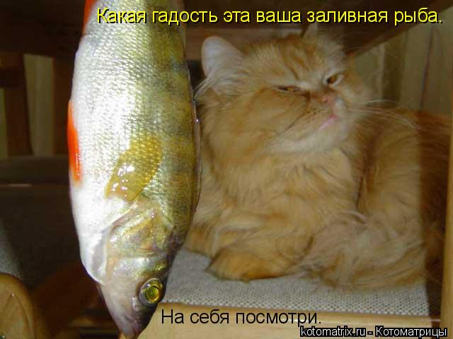 Котоматрица: На себя посмотри. Какая гадость эта ваша заливная рыба.