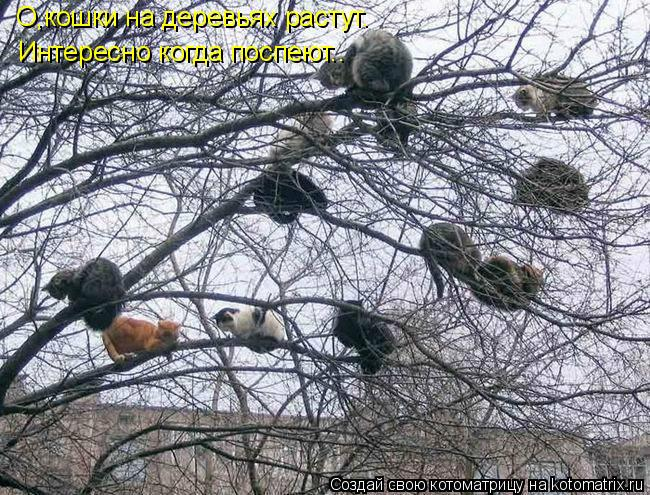 Котоматрица: О,кошки на деревьях растут. Интересно когда поспеют..