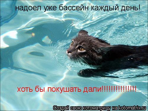 Котоматрица: надоел уже бассейн каждый день! хоть бы покушать дали!!!!!!!!!!!!!!!