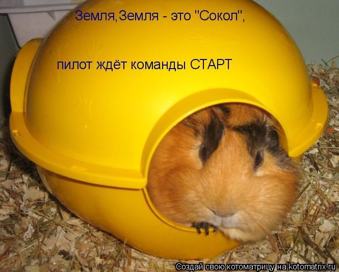 """Котоматрица: Земля,Земля - это """"Сокол"""", пилот ждёт команды СТАРТ"""