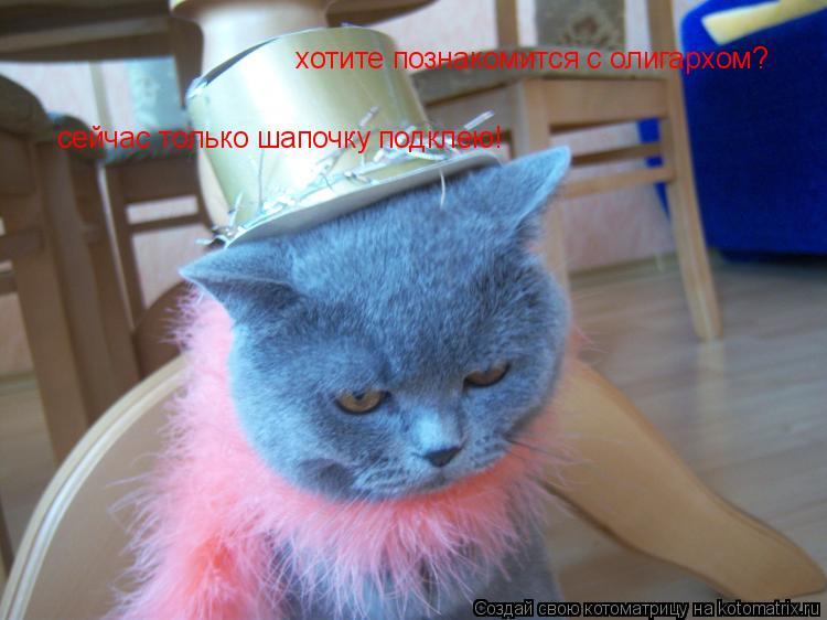 Котоматрица: хотите познакомится с олигархом?  сейчас только шапочку подклею!