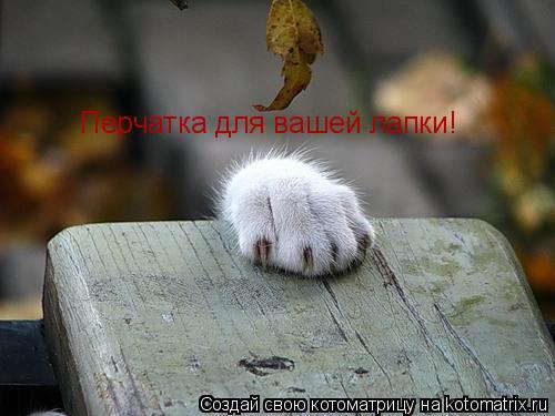 Котоматрица: Перчатка для вашей лапки!