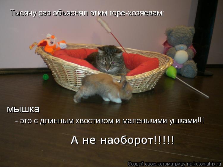 Котоматрица: Тысячу раз объяснял этим горе-хозяевам: мышка  - это с длинным хвостиком и маленькими ушками!!! А не наоборот!!!!!