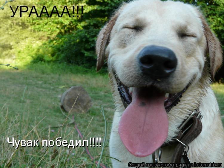 Котоматрица: УРАААА!!! Чувак победил!!!!