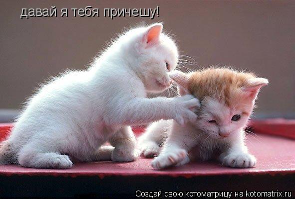 Котоматрица: давай я тебя причешу!