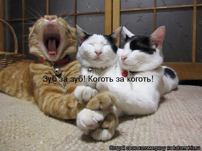 Котоматрица: Зуб за зуб! Коготь за коготь!