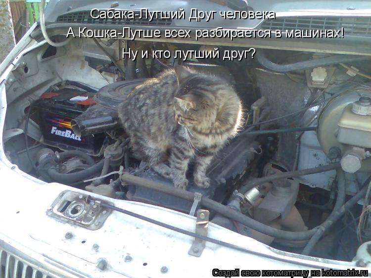 Котоматрица: Сабака-Лутший Друг человека А Кошка-Лутше всех разбирается в машинах! Ну и кто лутший друг?