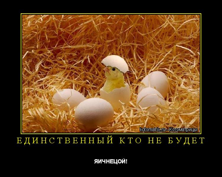 Котоматрица: Единственный кто не будет ЯИЧНЕЦОЙ!