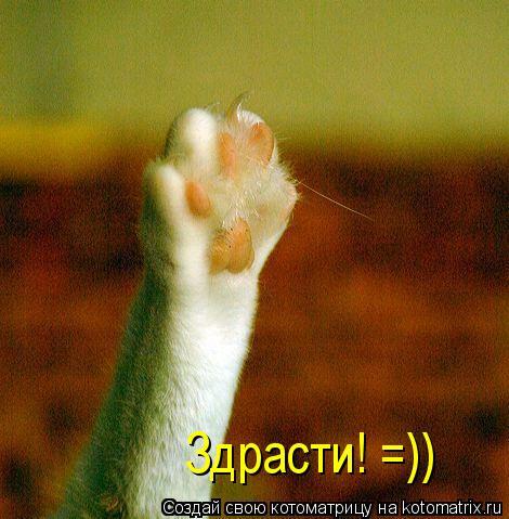 Котоматрица: Здрасти! =))