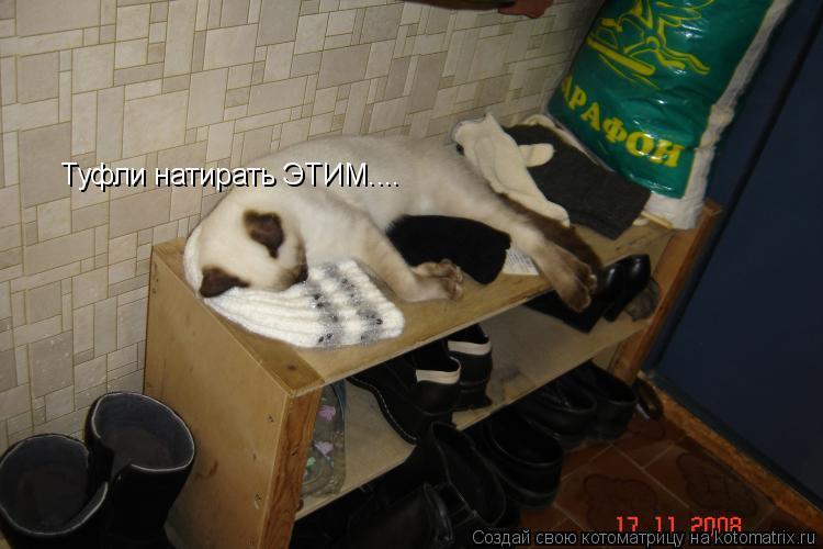 Котоматрица: Туфли натирать ЭТИМ....