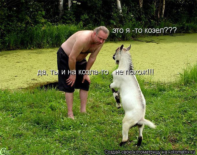 Котоматрица: это я -то козел??? да, ты и на козла-то , не похож!!!