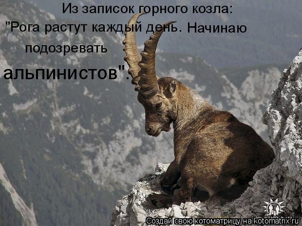 """Котоматрица: Из записок горного козла: """"Рога растут каждый день. Начинаю подозревать альпинистов""""."""