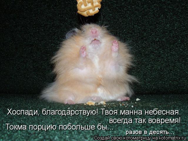 Котоматрица: Хоспади, благодарствую! Твоя манна небесная всегда так вовремя! Токма порцию побольше бы... разов в десять...