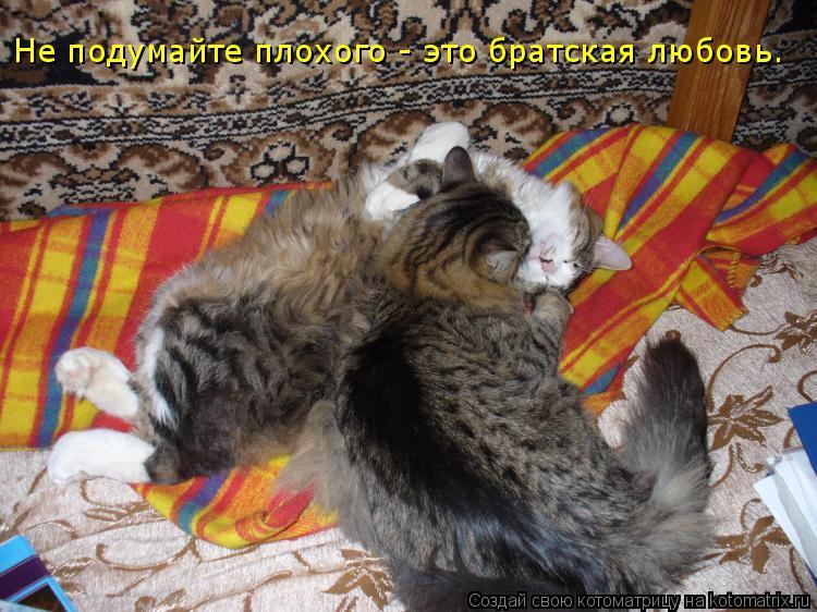 Котоматрица: Не подумайте плохого - это братская любовь.