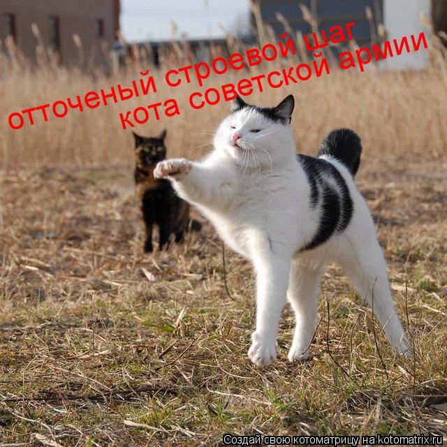 Котоматрица: отточеный строевой шаг кота советской армии