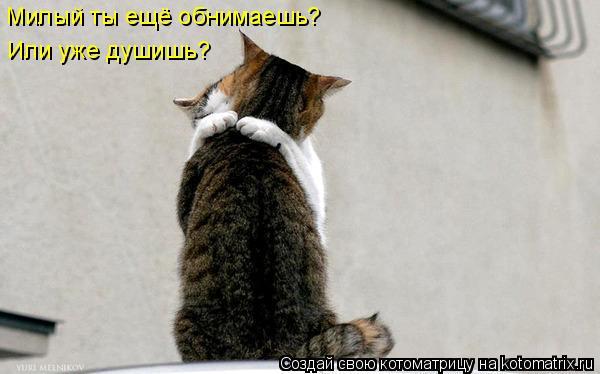 Котоматрица: Милый ты ещё обнимаешь? Или уже душишь?