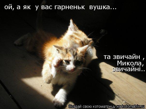 Котоматрица: ой, а які у вас гарненькі вушка ой, а які у вас гарненькі вушка... та звичайні, Микола, звичайнi...