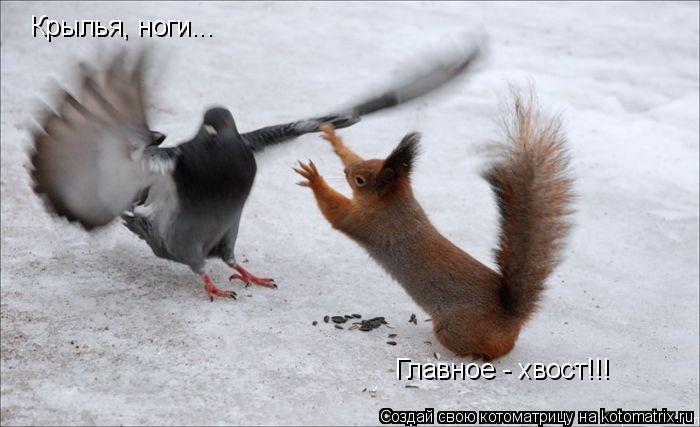 Котоматрица: Крылья, ноги... Главное - хвост!!!