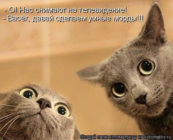 Котоматрица: - О! Нас снимают на телевидение! - Васёк, давай сделаем умные морды!!!