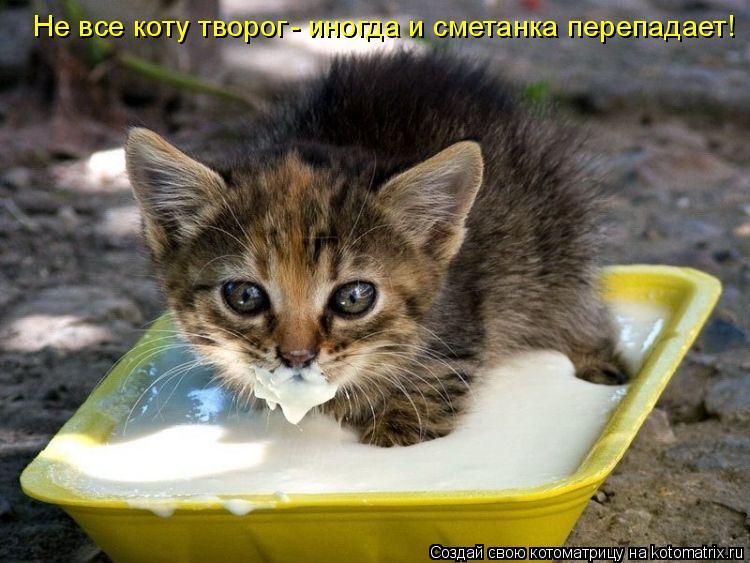 Котоматрица: Не все коту творог - иногда и сметанка перепадает!