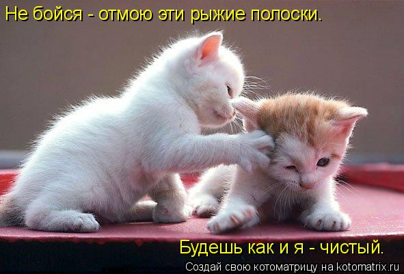 Котоматрица: Не бойся - отмою эти рыжие полоски. Не бойся - отмою эти рыжие полоски. Будешь как и я - чистый. Будешь как и я - чистый.