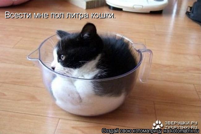 Котоматрица: Всести мне пол литра кошки.
