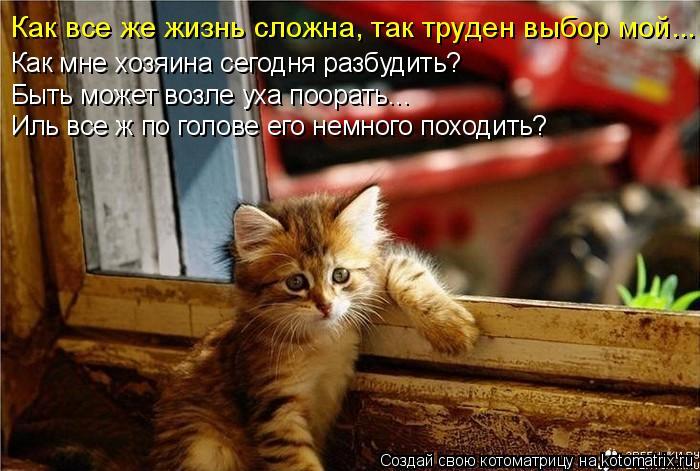 Котоматрица: Как все же жизнь сложна, так труден выбор мой... Как мне хозяина сегодня разбудить? Быть может возле уха поорать... Иль все ж по голове его немн