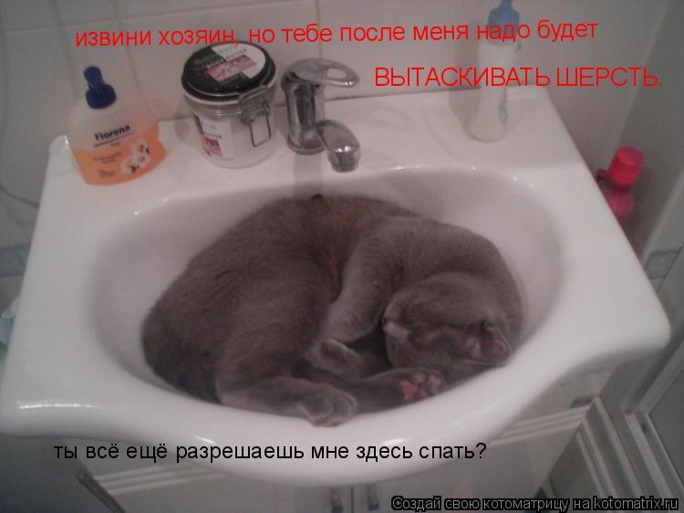 Котоматрица: извини хозяин, но тебе после меня надо будет ВЫТАСКИВАТЬ ШЕРСТЬ. ты всё ещё разрешаешь мне здесь спать?