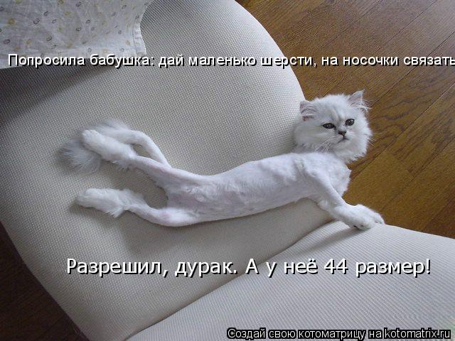 Котоматрица: Попросила бабушка: дай маленько шерсти, на носочки связать. Разрешил, дурак. А у неё 44 размер!
