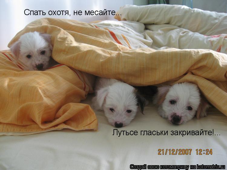 Котоматрица: Спать охотя, не месайте... Лутьсе гласьки закривайте!...