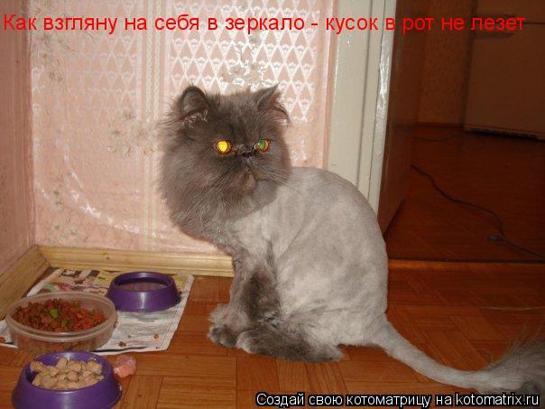 Котоматрица: Как взгляну на себя в зеркало - кусок в рот не лезет Как взгляну на себя в зеркало - кусок в рот не лезет