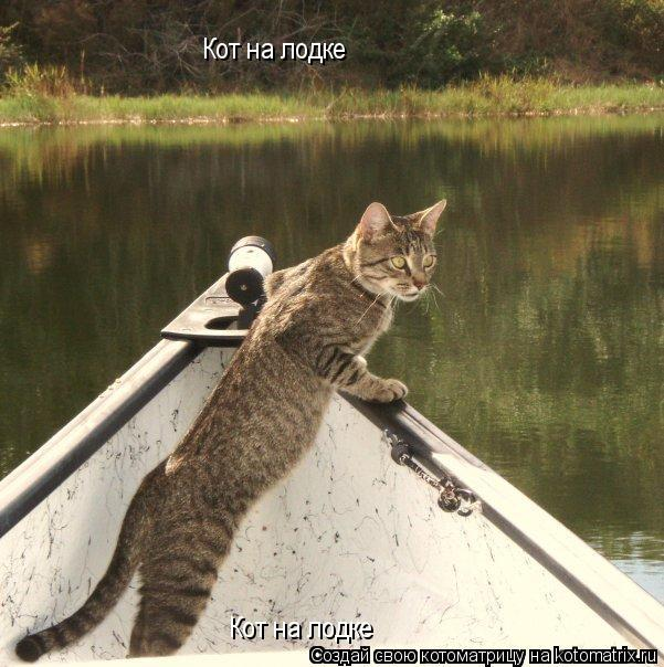 Котоматрица: Кот на лодке Кот на лодке