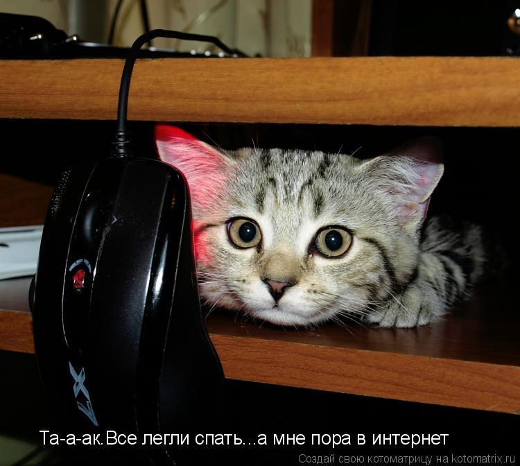 Котоматрица: Та-а-ак.Все легли спать...а мне пора в интернет