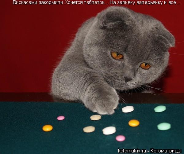 Котоматрица: Вискасами закормили.Хочется таблеток... На запивку валерьянку и всё...