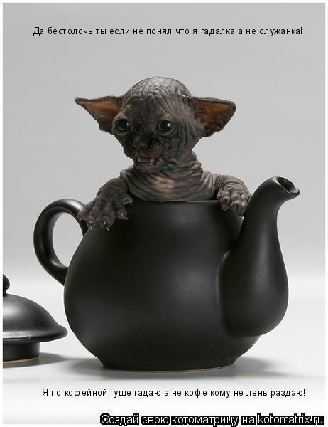 Котоматрица: Да бестолочь ты если не понял что я гадалка а не служанка! Я по кофейной гуще гадаю а не кофе кому не лень раздаю!