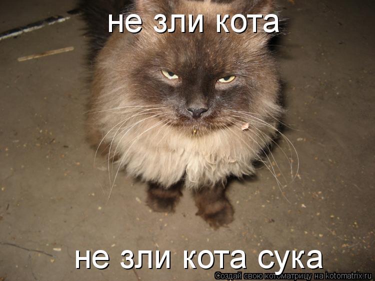 Котоматрица: не зли кота  не зли кота сука