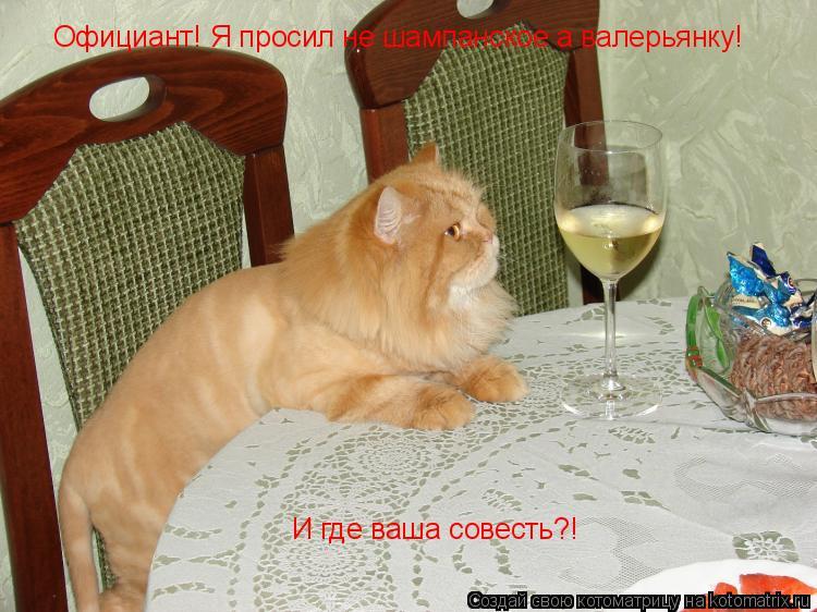 Котоматрица: Официант! Я просил не шампанское а валерьянку! И где ваша совесть?!