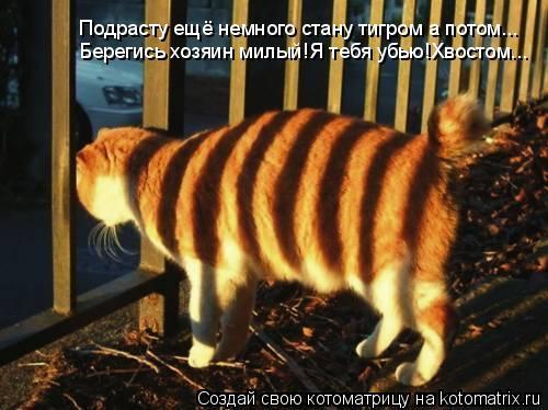 Котоматрица: Подрасту ещё немного стану тигром а потом... Берегись хозяин милый!Я тебя убью!Хвостом...