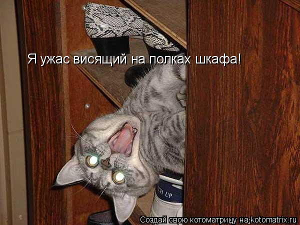 Котоматрица: Я ужас висящий на полках шкафа!