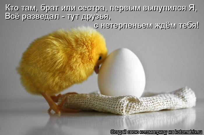 Котоматрица: Кто там, брат или сестра, первым вылупился Я, Всё разведал - тут друзья,  с нетерпеньем ждём тебя!