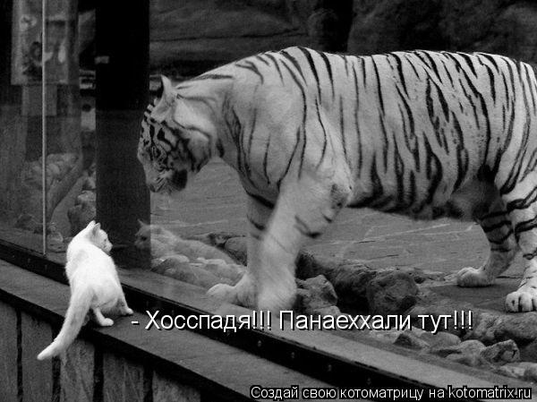 Котоматрица: - Хосспадя!!! Панаеххали тут!!!