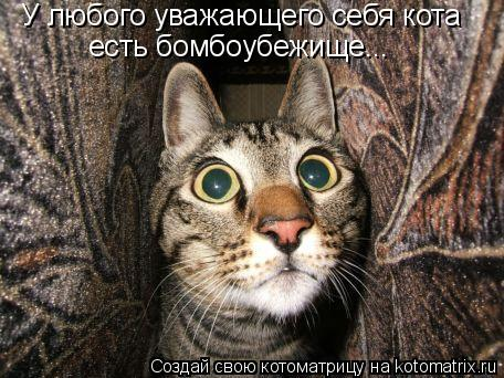 Котоматрица: У любого уважающего себя кота  есть бомбоубежище...