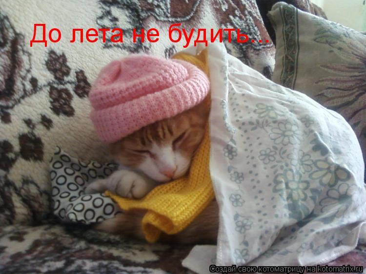 Котоматрица: До лета не будить...