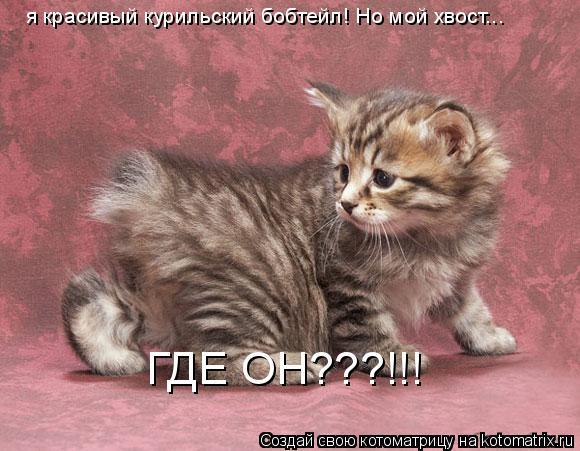Котоматрица: я красивый курильский бобтейл! Но мой хвост...  ГДЕ ОН???!!!