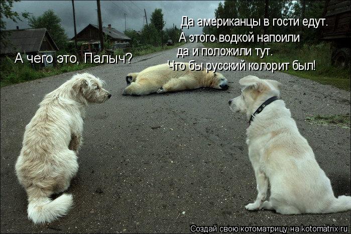 Котоматрица: А чего это, Палыч? Да американцы в гости едут. А этого водкой напоили  да и положили тут. Что бы русский колорит был!