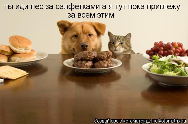 Котоматрица: ты иди пес за салфетками а я тут пока приглежу  за всем этим