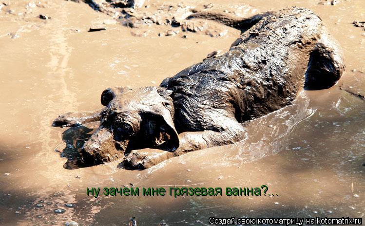 Котоматрица: ну зачем мне грязевая ванна?...