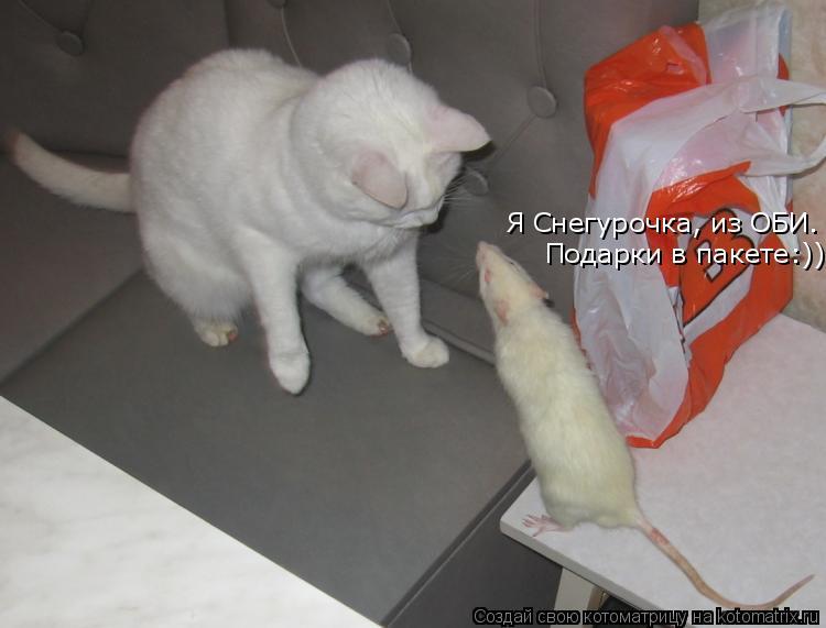 Котоматрица: Я Снегурочка, из ОБИ.  Подарки в пакете:))