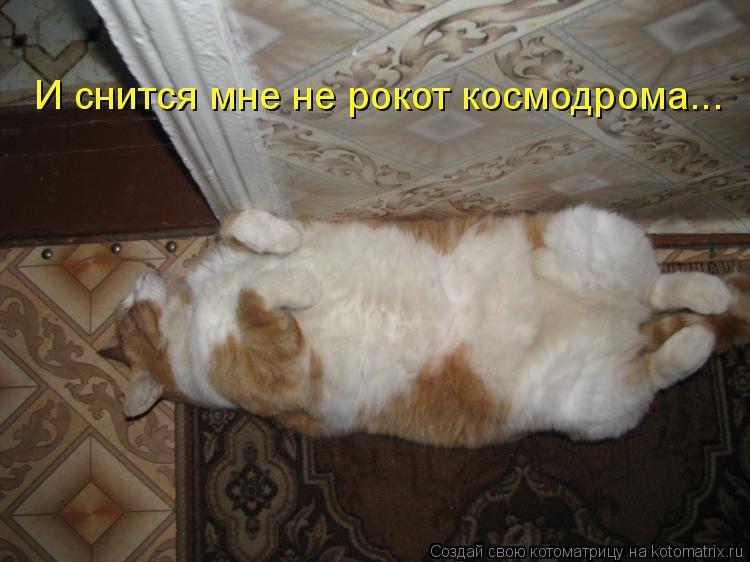 Котоматрица: И снится мне не рокот космодрома...