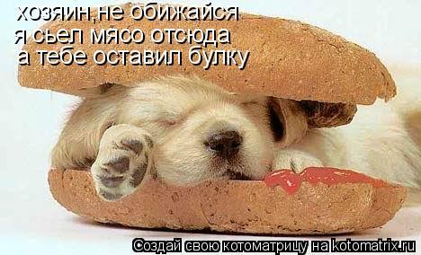 Котоматрица: хозяин,не обижайся я сьел мясо отсюда а тебе оставил булку